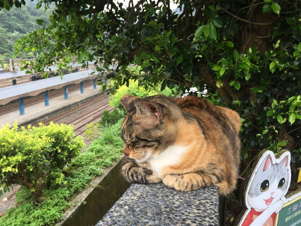 houtong cat village taiwan (1)