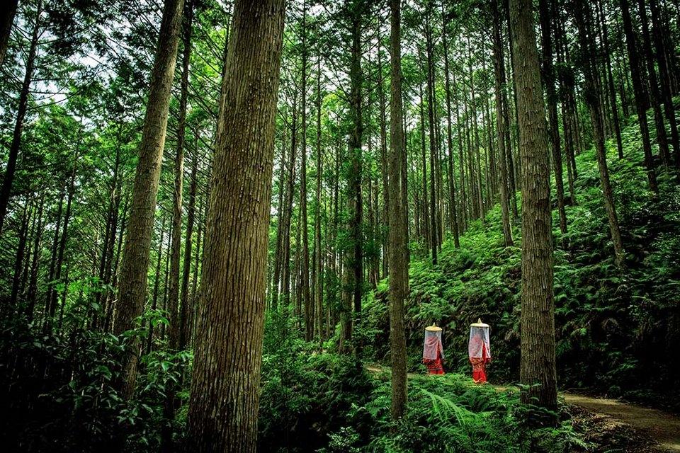 Kumano Kodo, Wakayama,wakayama travel blog,wakayama travel guide,wakayama blog