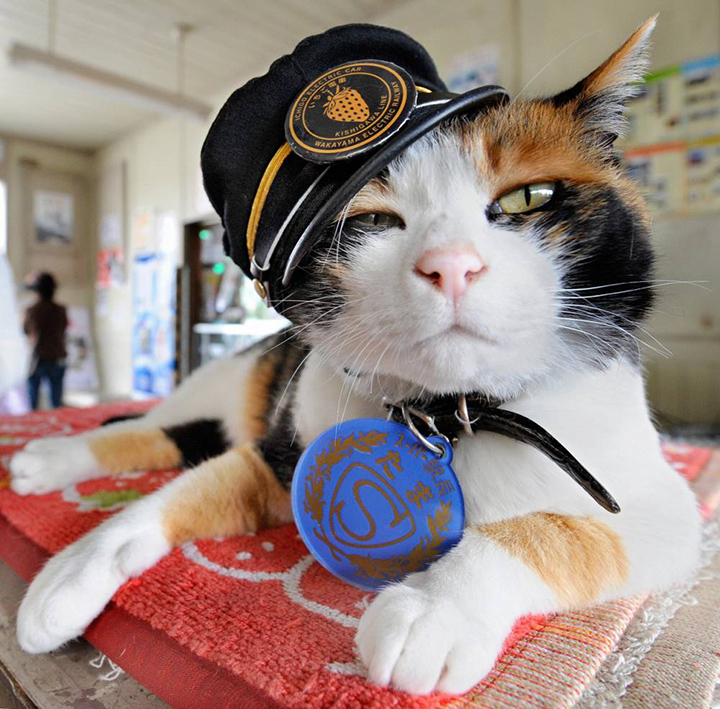 tama cat chief station (1)