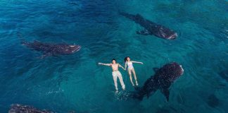 oslob whale shark cebu