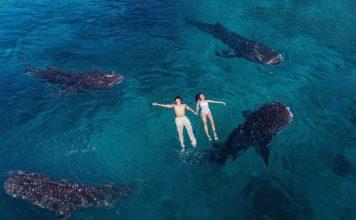 oslob whale shark cebu