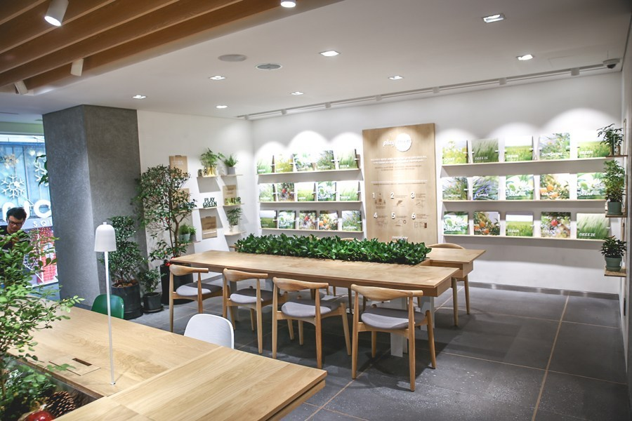 Innisfree Jeju House,4 days in jeju,jeju 4 days 3 nights itinerary,jeju 4d3n itinerary,jeju island itinerary,jeju itinerary 4 days (1)