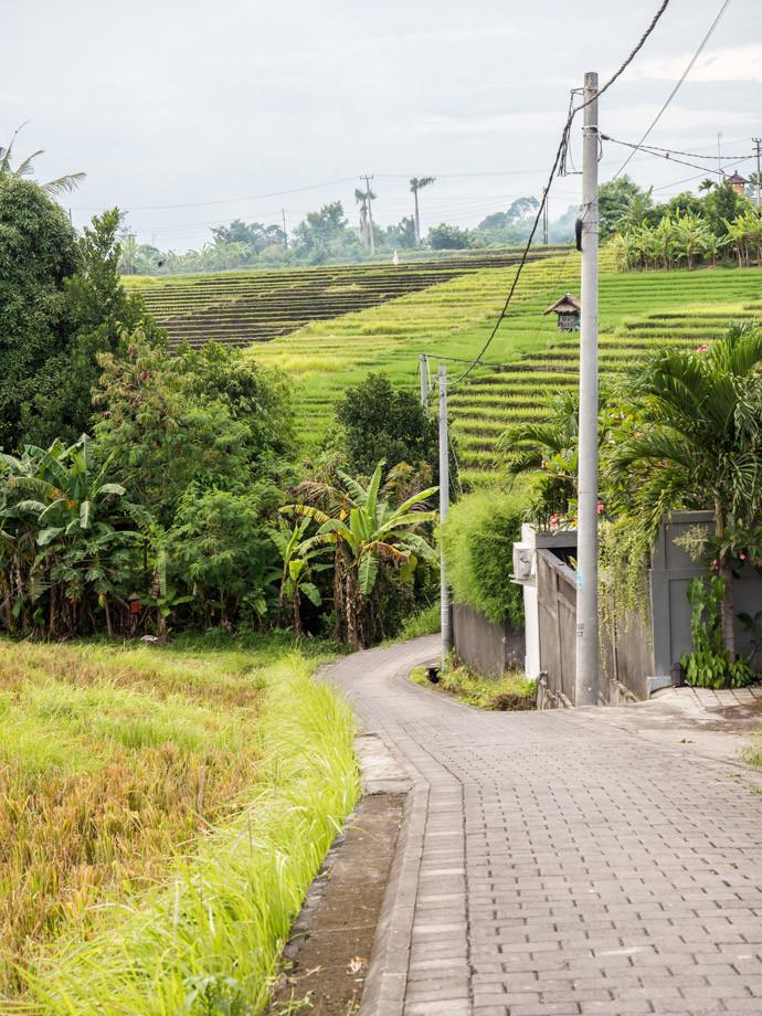 the-first-sign-of-canggu-rice-fields-jalan-pura-blulang-yeh,canggu bali things to do,canggu blog,canggu guide,canggu travel guide,things to do in canggu blog