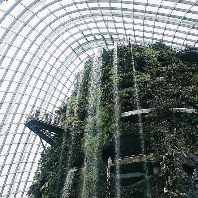 The time of fog spraying at Cloud Forest