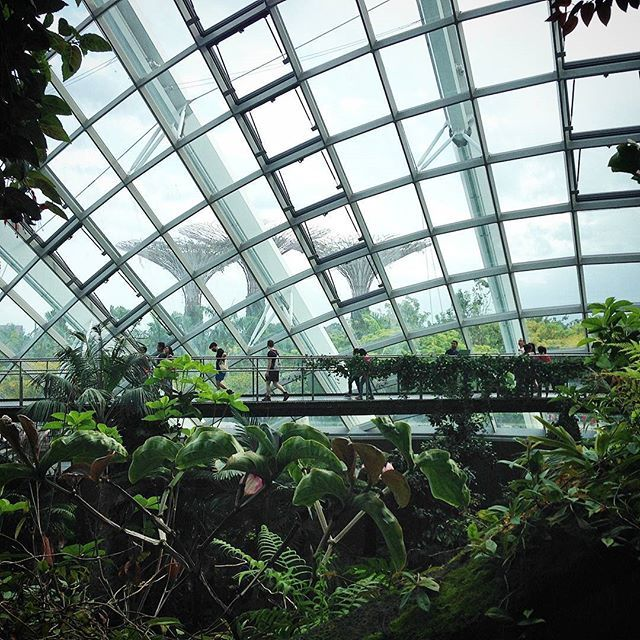 The Cloud Forest,gardens by the bay blog,gardens by the bay singapore,how to visit gardens by the bay,gardens by the bay guide (1)