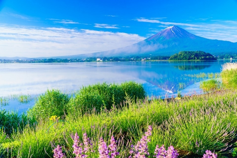 oishi park, kawaguchiko travel blog (7)