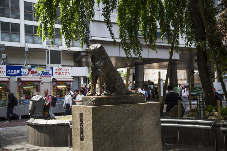The famous of Hachiko Statue