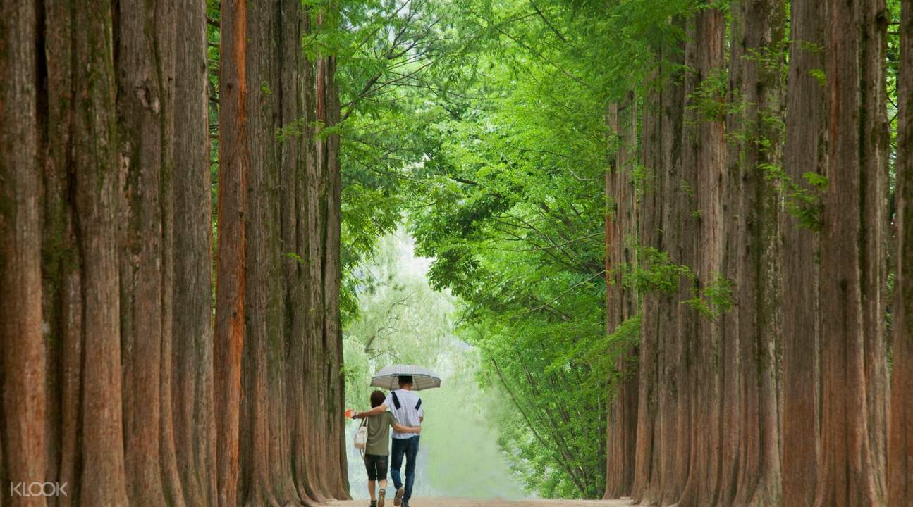 2what to do in nami island,nami island travel blog,nami island travel guide,nami island guide,nami island blog