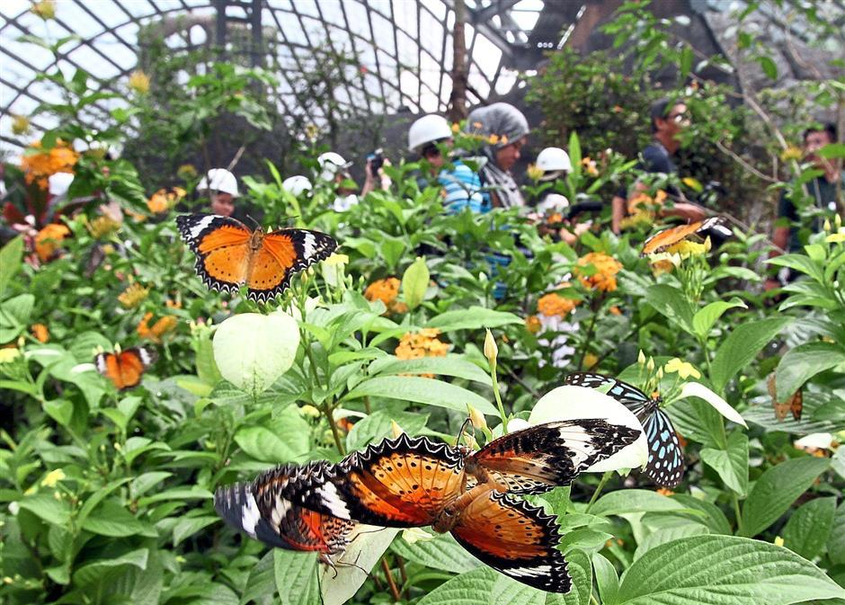 Penang Butterfly Farm (1)