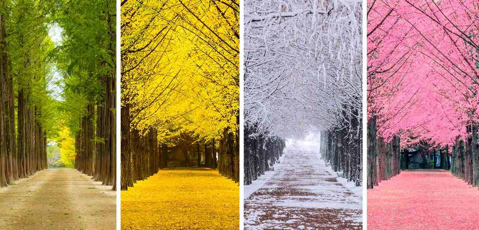Nami's beauty in four seasons, each season has its own charm.