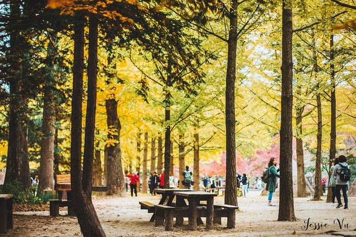 nami island one day trip,nami island travel blog,nami island travel guide
