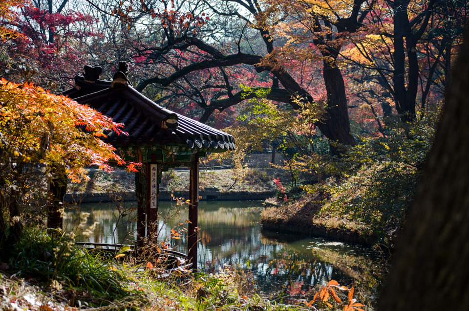 Changdeokgung Palace - Secret Garden 2_j