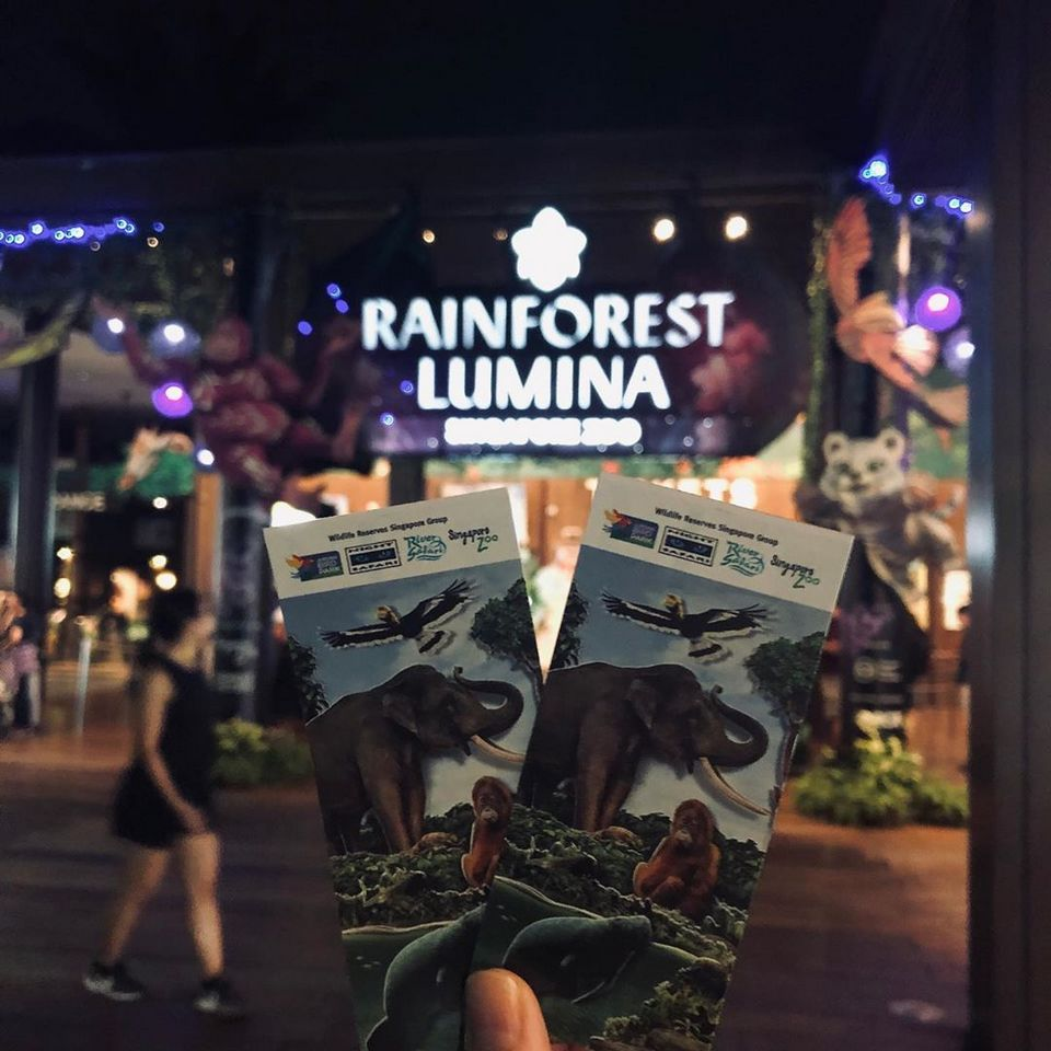 rainforest lumina singapore zoo,what to do in sg at night,what to do in singapore at night,what to do at singapore at night (1)
