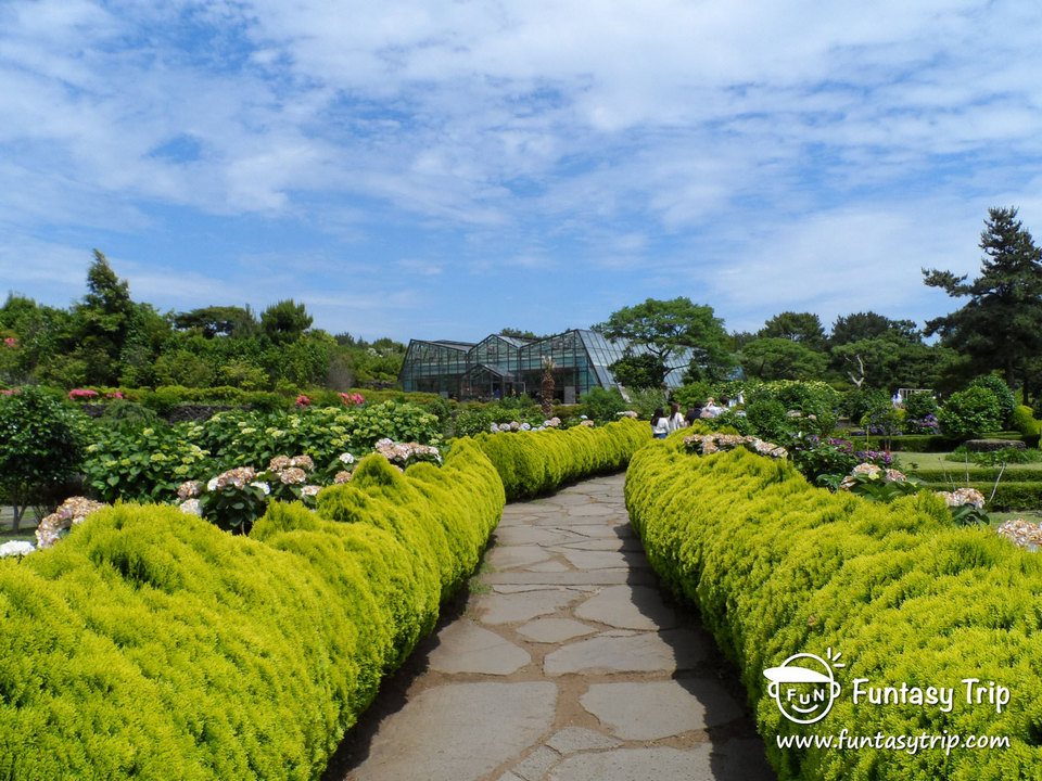 Camellia Hill jeju,best places to visit in jeju island,jeju must go places,must see places in jeju,must go places in jeju (5)