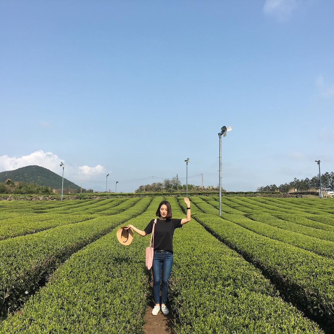 o'sulloc tea fields