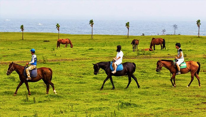 horse riding jeju (2)