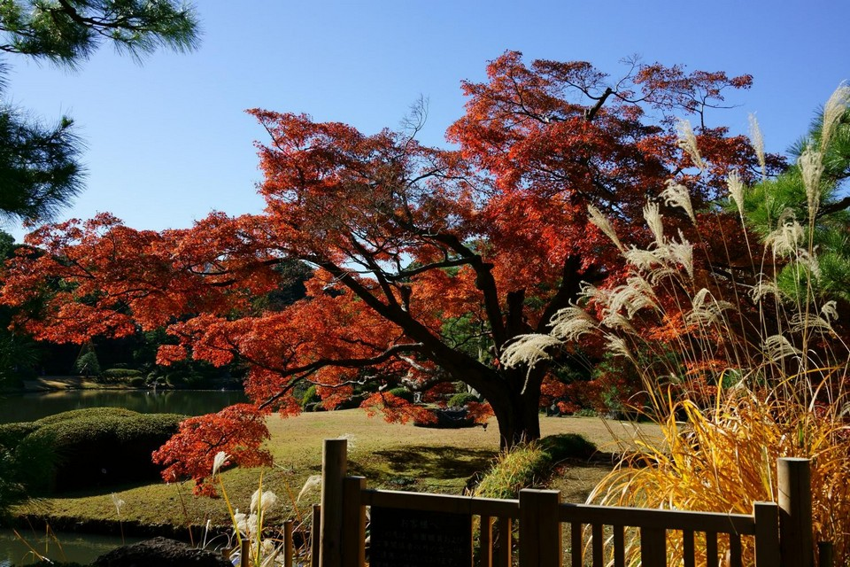 Rikugien Garden autumn fall (1)