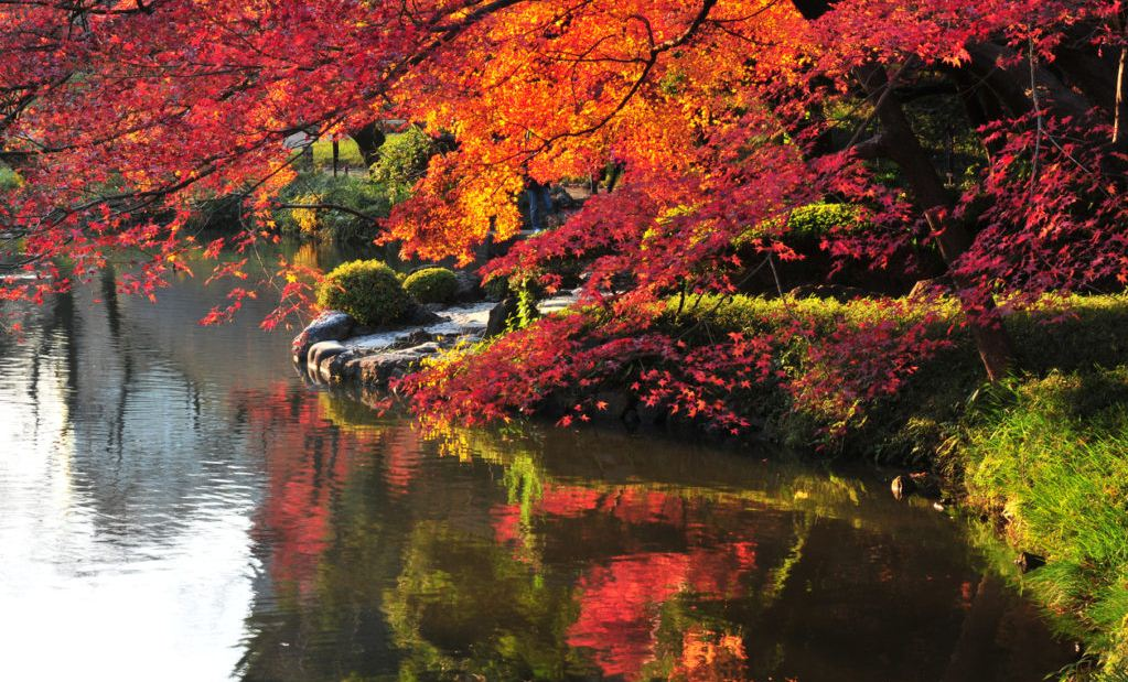 ,best autumn spots in tokyo,best place to see autumn leaves in tokyo,where to view autumn leaves in tokyo