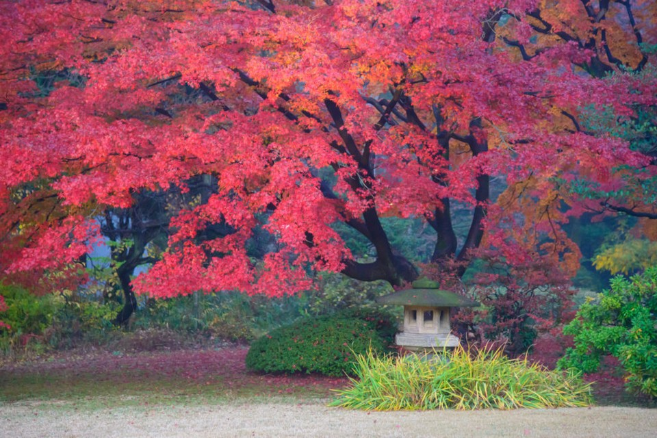 "Rikugien is often considered Tokyo's most beautiful Japanese landscape garden. Built around 1700 for the 5th Tokugawa Shogun. Rikugien literally means ""six poems garden""."
