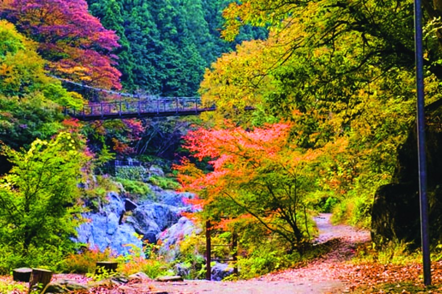 ,best autumn spots in tokyo,best place to see autumn leaves in tokyo,where to view autumn leaves in tokyo (1)