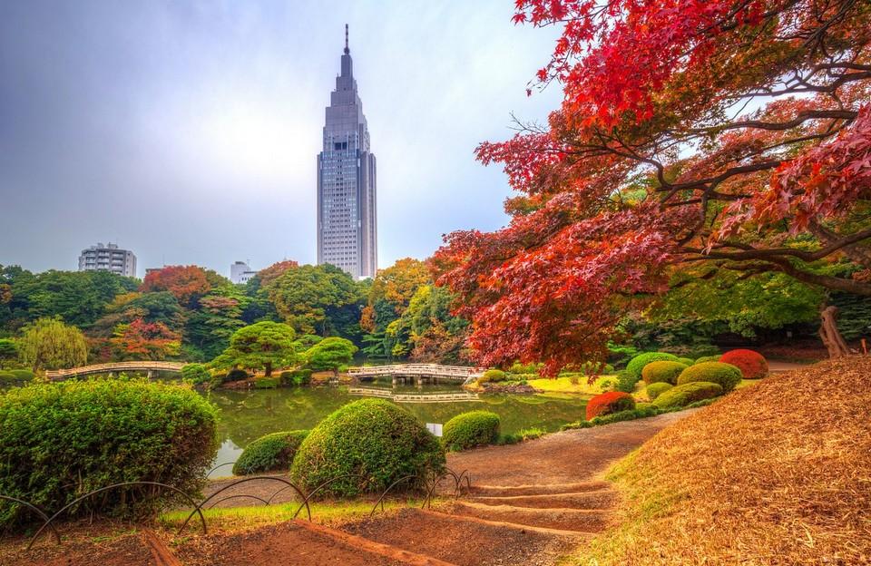 Shinjuku Gyoen park autumn tokyo (1)