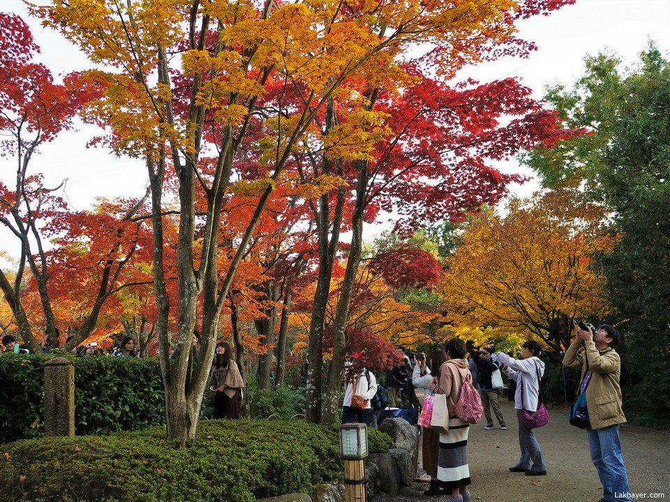 Showa Memorial Park (Showa Kinen Park) autumn, best autumn spots in tokyo (1)