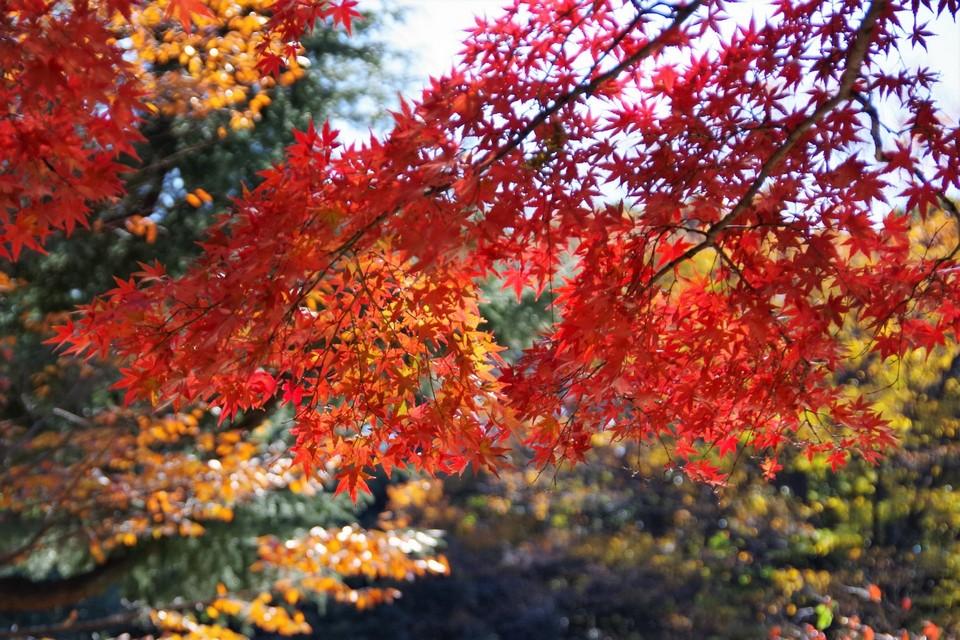 Yoyogi Koen (Yoyogi Park) autumn (1)