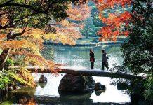 best autumn foliage in tokyo