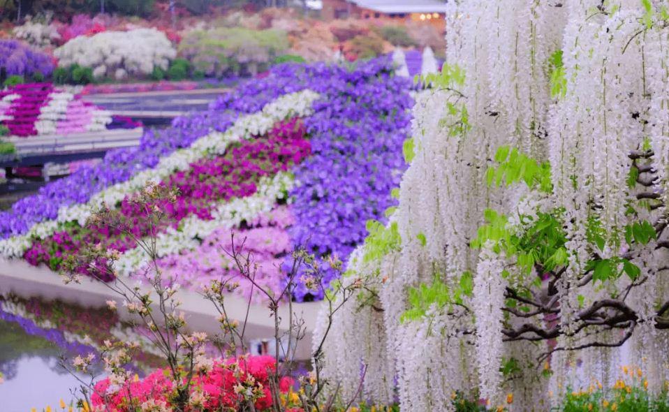 Ashikaga Flower Park autumn,best place to see autumn leaves in japan,best autumn spots in japan