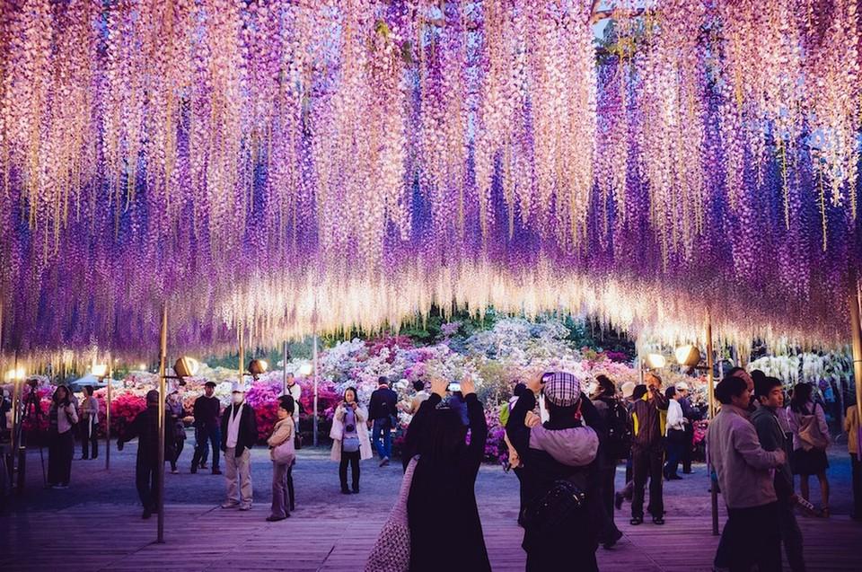Ashikaga Flower Park autumn (11)