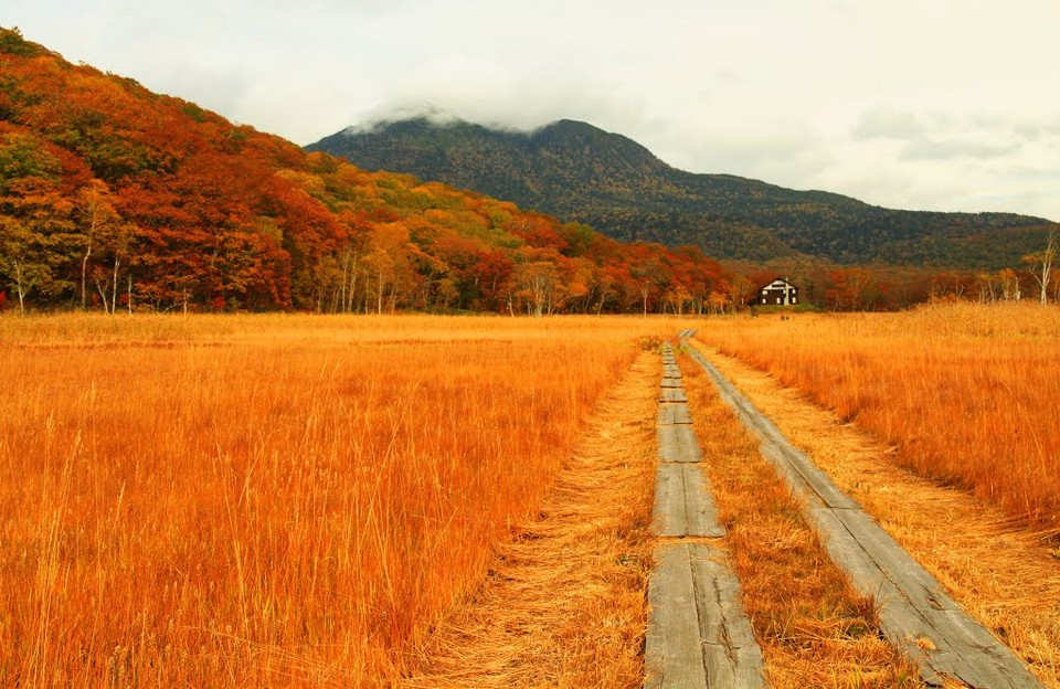 Gunma-Autumn-Foliage-Oze-National-Park8