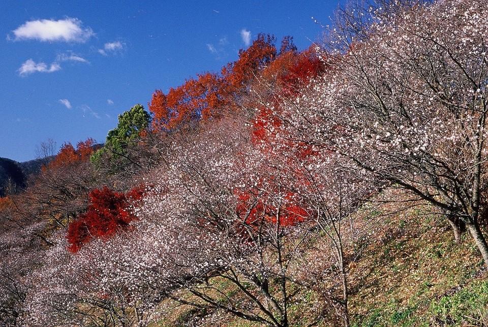 Sakurayama Park (1)