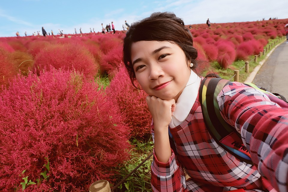 kochia-hitachi-seaside-park-autumn-japan-travel-ibaraki-38