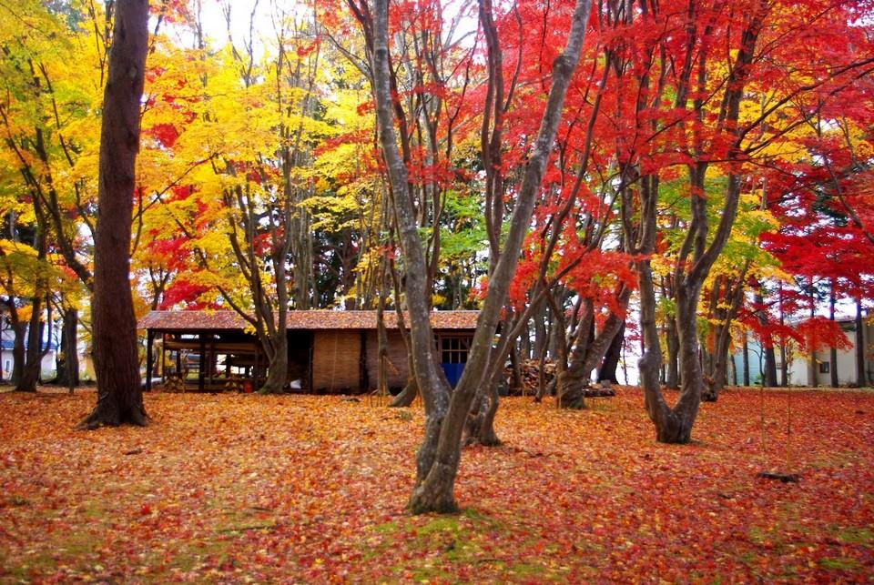 Goryokaku Park (Hokadate) autumn (4)