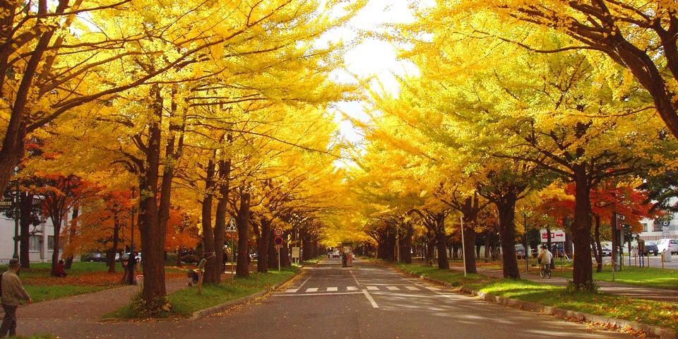 Hokkaido University autumn (2)