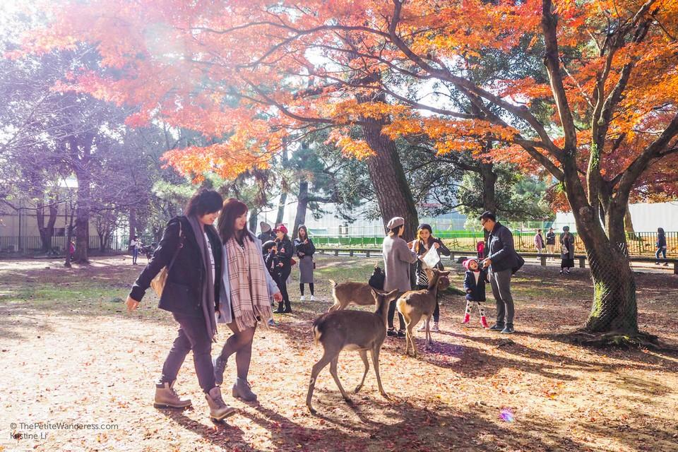 Nara japan autumn (1)