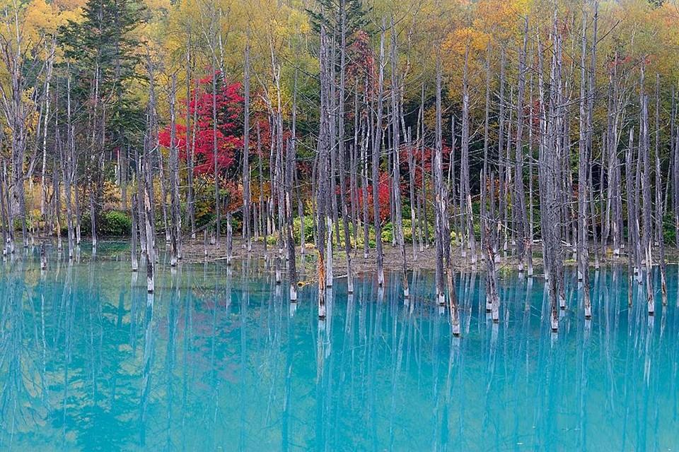 Shirogane Blue Pond autumn (1)