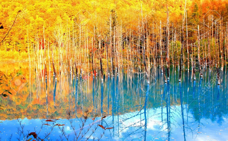Shirogane Blue Pond autumn (1)