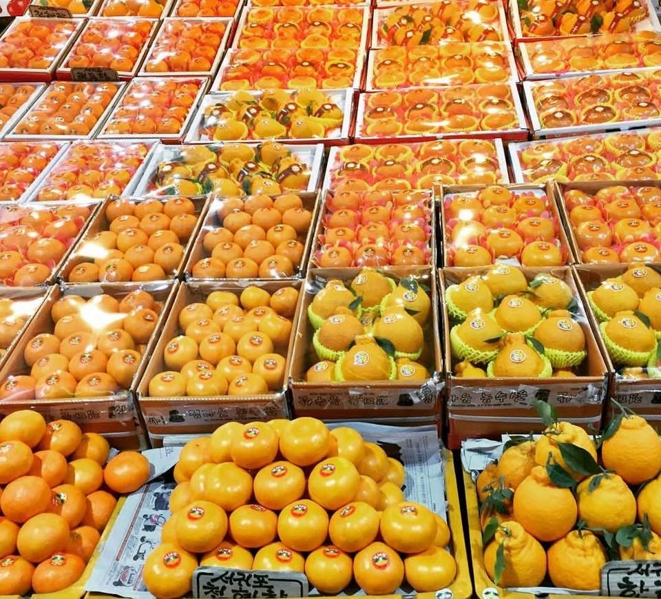 Hallabong jeju tangarines oranges (1)