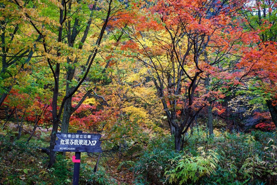 hokkaido travel blog autumn,places to visit in hokkaido during autumn,hokkaido fall foliage,hokkaido autumn leaves (4)
