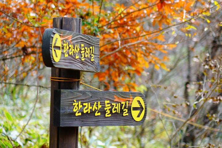 Hallasan jeju autumn,jeju autumn foliage,jeju autumn itinerary,jeju autumn month,jeju fall foliage,jeju autumn foliage