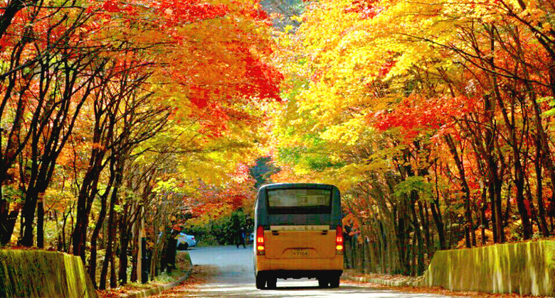 Image result for jeju island autumn
