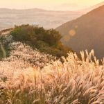 Jeju autumn itinerary — 6 best places to visit & top things to do in Jeju autumn foliage season