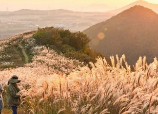 korea jeju autumn foliage,jeju autumn itinerary,jeju autumn month,jeju fall foliage,jeju autumn foliage