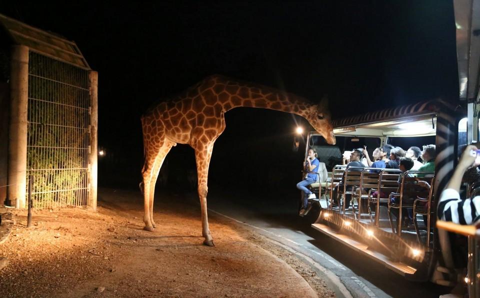 Top places to visit in Chiang Mai Chiang Mai Night Safari (1)