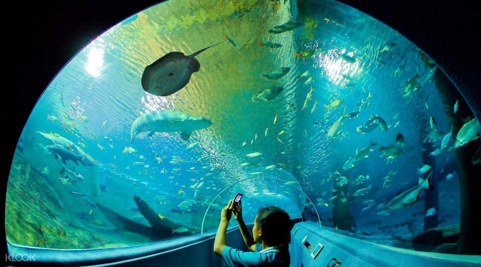 Top places to visit in Chiang Mai Chiang Mai Zoo Aquarium (1)