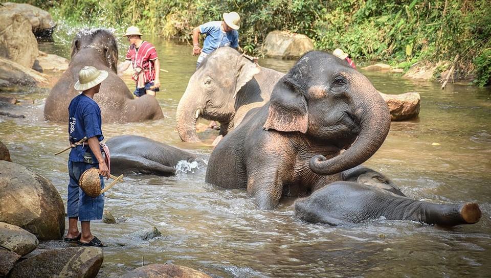 Where to go in Chiang Mai Maesa Elephant Camp (1)