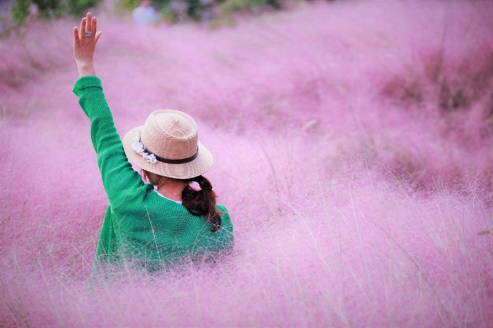 Nari Park (Yangju) muhly pink grass (1)