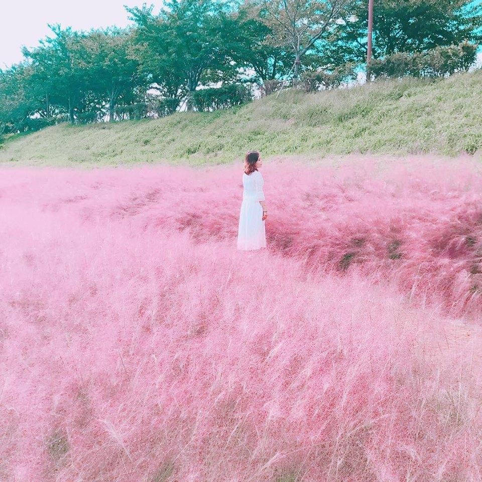 Nari Park (Yangju) muhly pink grass
