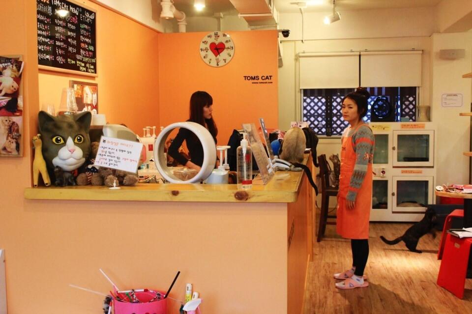 seoul theme cafe| cute cafes in seoul